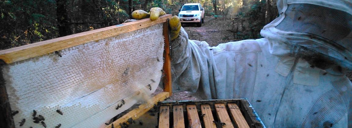 Produção do mel pelas abelhas.