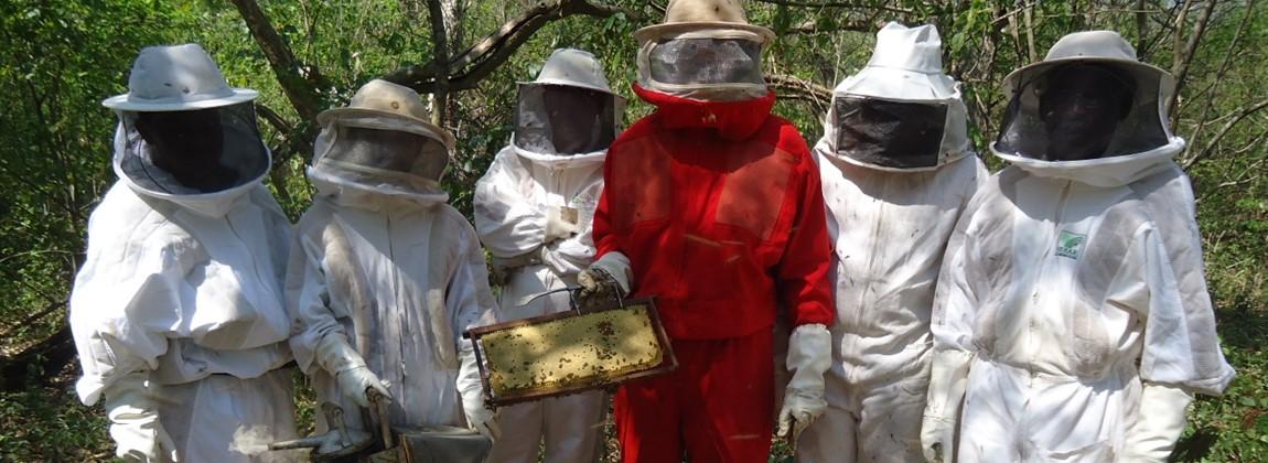 Equipe de apicultores.