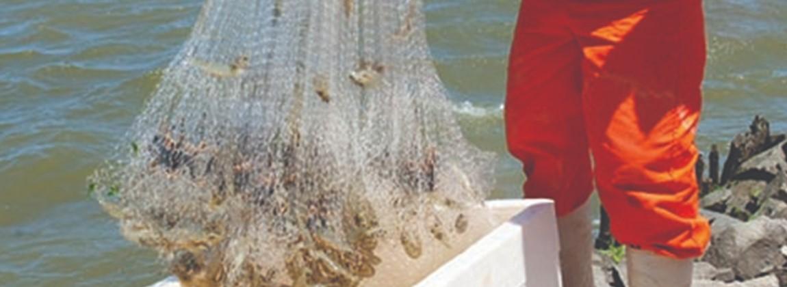 Pescador de camarões.