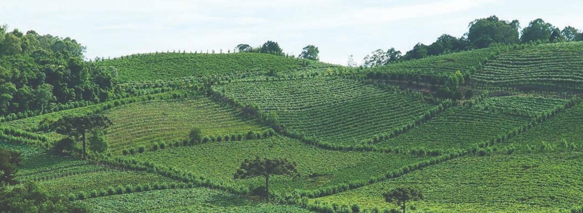 Vista ampliada da vinícola de Monte Belo