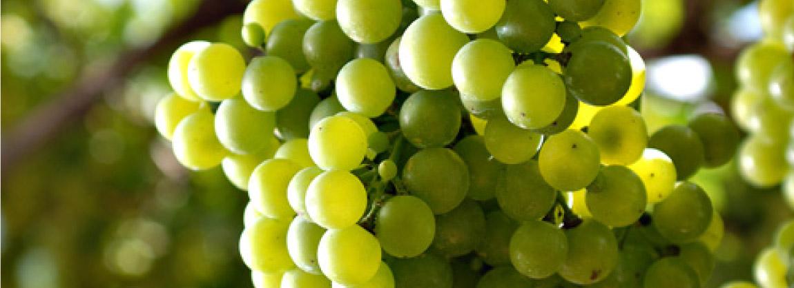 Cacho de uvas.