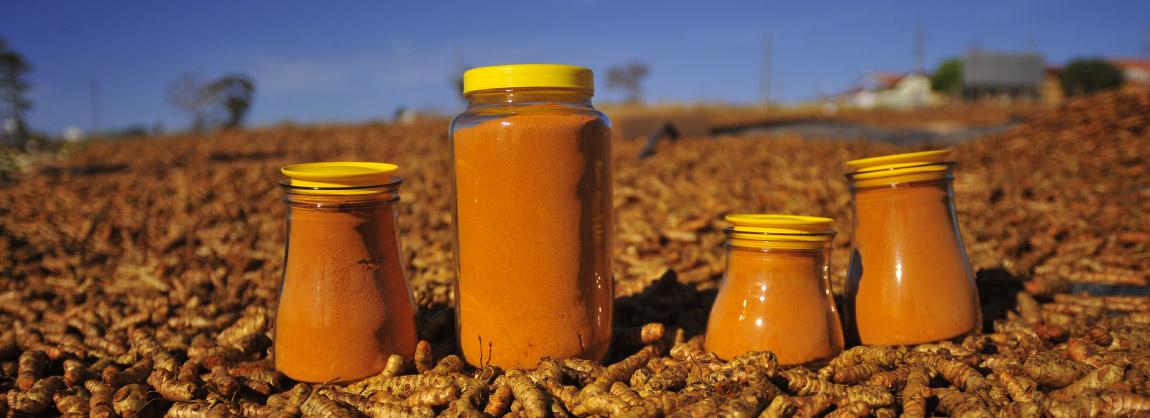 Açafrão da região de Mara Rosa pronto para ser comercializado