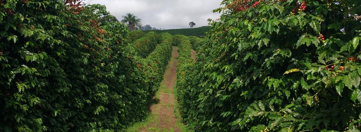Passagem entre a plantação.