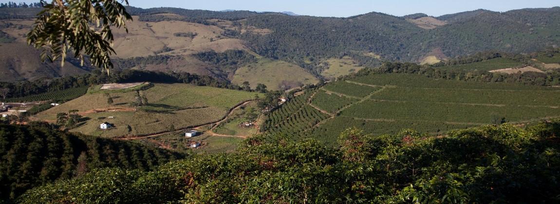 Vista aérea da plantação de café.