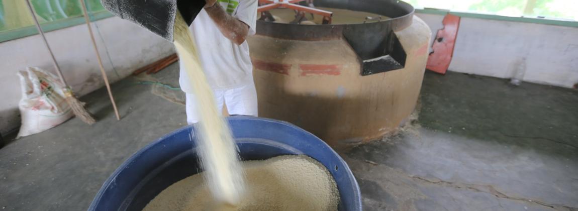 Produção da farinha de mandioca.