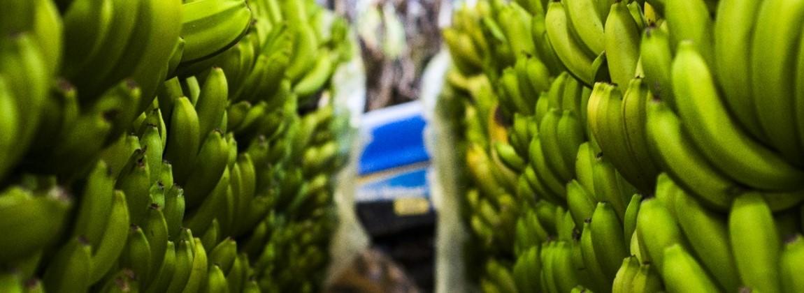 Cachos de banana.